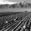 Governo Monti: grazie all'Imu chiudono le imprese agricole