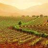 Agricoltura – Il valore del Biologico e il pericolo degli Ogm