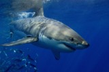 "Gli squali europei chiedono ""asilo politico"""