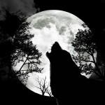 lupo_alla_luna