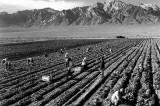 Crisi – Governo Monti: grazie all'Imu chiudono le imprese agricole