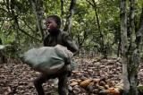"""Strasburgo: """"Stop a lavoro minorile e tratta di schiavi nei campi di cacao!"""""""
